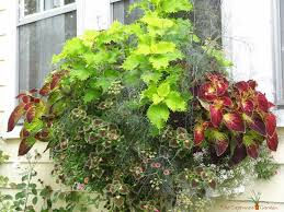 Colorful Shade Container Garden Part IContainer Garden Ideas For Shade