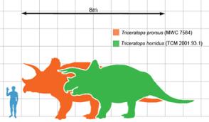 Dinosaur Sizes Comparison Chart Dinosaur Size Wikipedia
