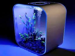 Fish Tank Accessories And Decorations A Guide To Choose The Best Fish Tank Accessories marinetank100 41