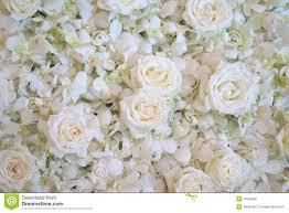 Witte Rozen Nuttig Voor Achtergrond Stock Afbeelding Afbeelding