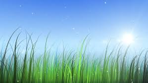 grass and sky backgrounds. Moving Grass With Sky And Sun - HD Stock Video Clip Backgrounds S