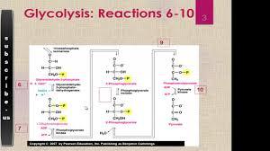 Glycolysis Steps 6 10 Youtube