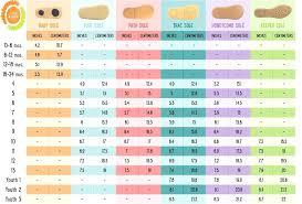 30 Studious Stride Rite Socks Size Chart