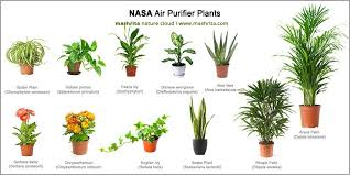 29 best air purifying plants from nasa