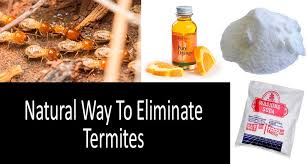 natural termite killer. Simple Natural How To Get Rid Of Termites Naturally Photo Intended Natural Termite Killer R