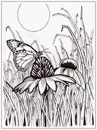 Butterfly Coloring Pages For Adults Wallpaper Download Butterfly