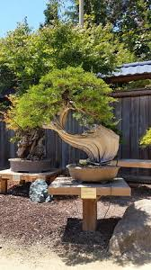 bonsai garden display picture of gs