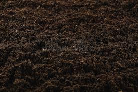 fertile garden. Download Fertile Garden Soil Texture Background Top View Stock Image - Of Garden, Above