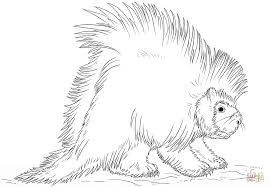 Small Picture North American porcupine coloring page Free Printable Coloring Pages