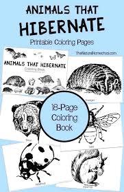 Hibernation Worksheets For Preschool The Best Worksheets Image ...