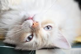 cat funny funny cat