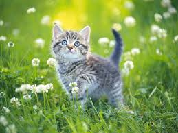 wallpapers from cute pets wallpaper kitten enjoying the nature hd wallpapers