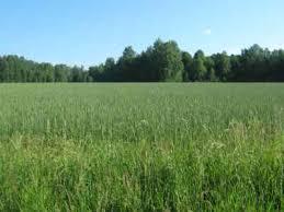 Изучение лекарственных растений пойменного луга и леса Пойменный луг