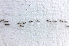 Ant Control Tips To Get Rid Of Ants Without An Exterminator