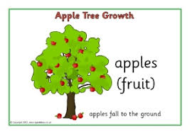 Plant Growth Primary Teaching Resources And Printables
