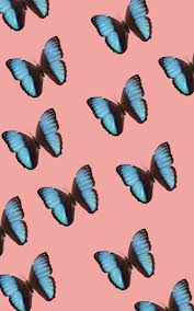 Blue Butterfly Wallpaper Tumblr