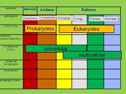 Domainarchaea Bacteriaeukarya Kingdom Archaebacteria Kingdom