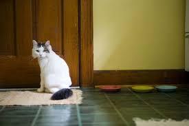 Das mädchen, sitzen, in, der sessel die katze, sitzen, auf, der baum Warum Katzen Auf Teppichen Kacken Wie Man Ein Gluckliches Zuhause Fur Sein Haustier Schafft