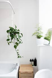 Shower Plants 5 Plants That Thrive In Your Bathroom A