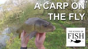 Image result for fly fishing for carp pics