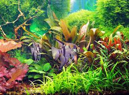 Delightful Dann Ist Die Aquaristik Genau Das Richtige Für Dich! Wie Du Ein Aquarium  Einrichten Solltest, Was Du Hierfür Benötigst Und ...