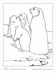 Prairie Dog Coloring Page Grasslands Dog Coloring Page Animal