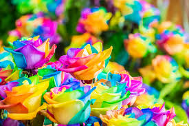 Fleur Rose Signification Fashion Designs