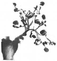 「ヒトと発生」の画像検索結果