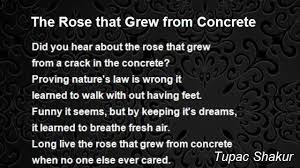 the rose that grew from concrete poem by tupac shakur poem hunter