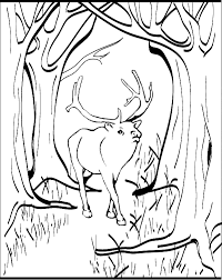 Small Picture Elk coloring page Animals Town Free Elk color sheet