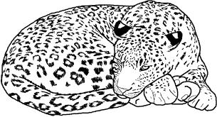 Leopard Jaguar Coloring Pages Print Coloring