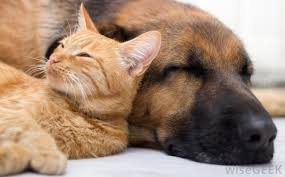 dog and cat sleeping together. Beautiful Sleeping Cat Sleeps All Day Intended Dog And Sleeping Together D