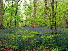 Image result for haigh hall woods wigan