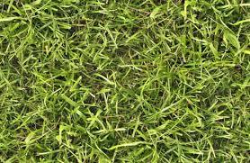 tall grass texture seamless. Free Grass Textures Tall Texture Seamless