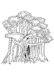 The cotton tree is a tropical tree belonging to the malvaceae family and malvales order. 35 Free Tree Coloring Pages Printable
