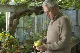 Growing Fruit Trees  Cashman NurseryWhen Do You Plant Fruit Trees