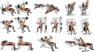 Co Ed Chest Workout Pectorals Wall Chart Poster Women Gym