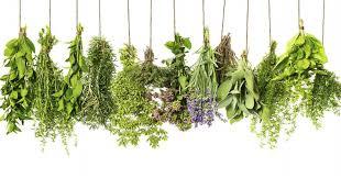 Resultado de imagem para ervas