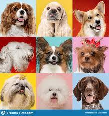 2,340 Cute Doggies Photos - Free ...