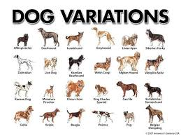 Dog Breed Chart With Names Dog Variations Dog Breeds Chart Small Dog Breeds Chart