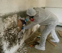 black mold removal services