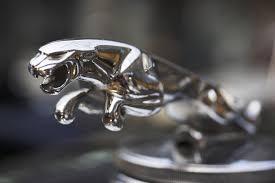 jaguar gifts and souvenirs