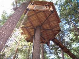 basic tree house pictures. Long Pipe Extensions Over Multiple GLs Each Out For Cables Beyond The Treehouse Platform, Supporting Basic Tree House Pictures