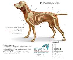 Canine Trigger Point Chart Red Light Therapy Red Light Therapy Light Therapy
