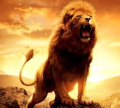 best lion wallpapers lion wallpapers