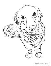 Small Picture Labrador coloring pages Hellokidscom
