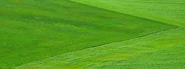 Budget Lawn Care 10 Tips For Lawn Care On A Budget By Trusty Joe