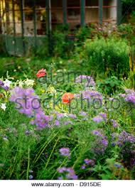 flourishing garden. A Flourishing Garden, Sweden. - Stock Photo Garden