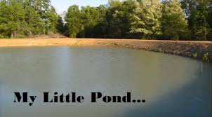Pond Pond Clearing Stocking Hybrid Bream Youtube