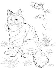 Pete The Cat Coloring Pages Pete The Cat Valentines Day Coloring
